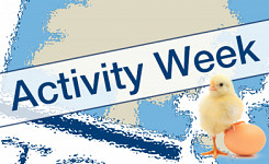Easter Activity Week